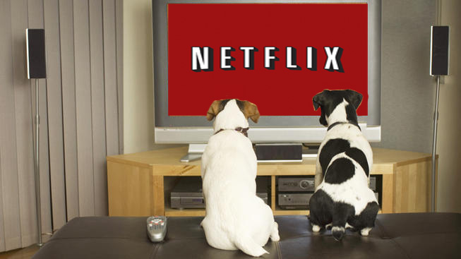 netflix, chilld, dogs