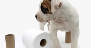 how to stop dog from pooping inside dog with toilet paper