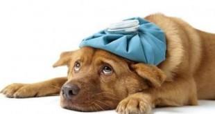 xylitol dog poison