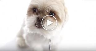 dog show, cute dog videos