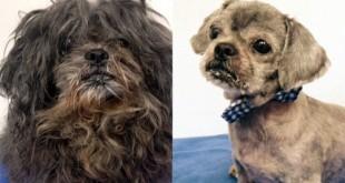 top shelter dog makeover transformation