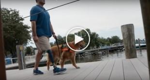 cute dog video, funny dog video, cute dog videos, funny dog videos