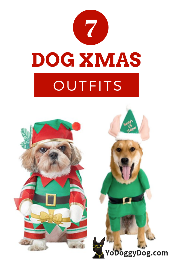 Dog Christmas Outfits & Costumes: 10 Amazingly Cute Options
