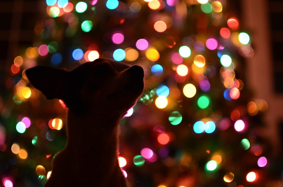 Survey: Most Pet Parents Will Buy Dog Gifts This Christmas