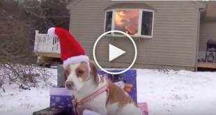 christmas dog video, funny christmas dog video, dogs destroying christmas