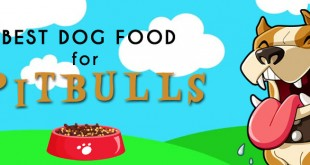best dog food for pitbull
