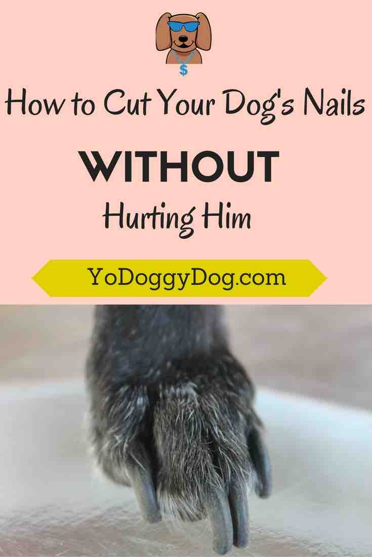 How to Cut A Dog\'s Nails (Without Hurting Him!)
