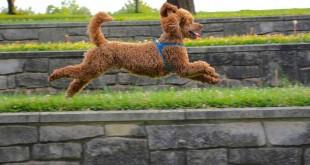 Best dog harness, dexdog,