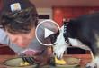 dog vs human, dog eating fast, eating contest