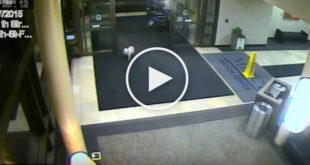cute dog video, dog walks to see owner, dog owner hospital
