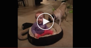 cute dog video, dog and baby video