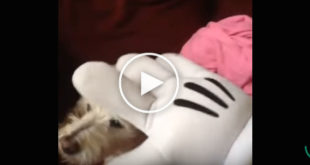 funny dog video, dog hates mickey mouse