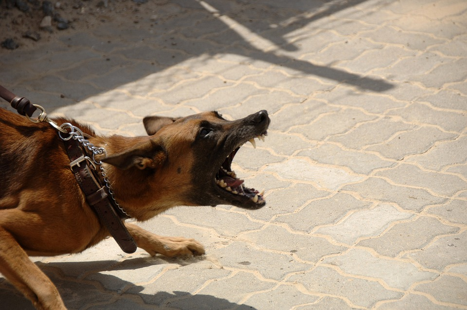 dog biting, how to stop dog biting