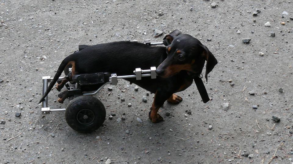 dog insurance cost