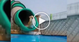 dog water slide