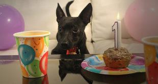 dog with a blog, dog birthday, dog birthday party