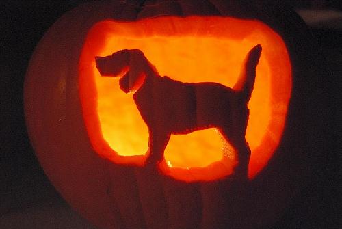 Dog Breed Stencils Pumpkin Carving