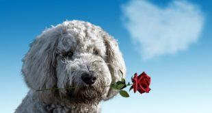 dog valentines day