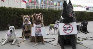dog protest