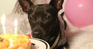 dog with a blog, dog birthday