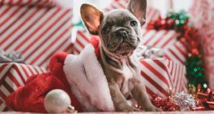 christmas themed girl dog names Archives - Yo Doggy Dog