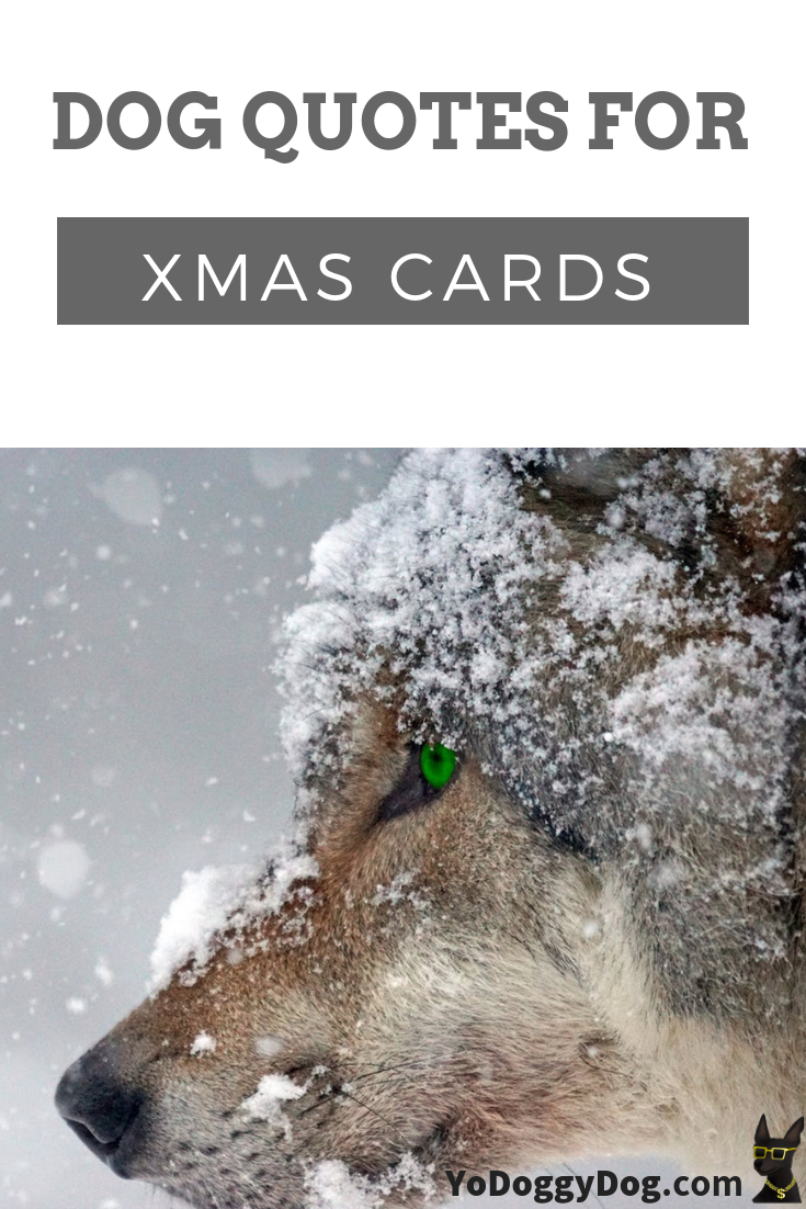 Pawsitively Punny And Funny Christmas Dog Quotes For Your Cards