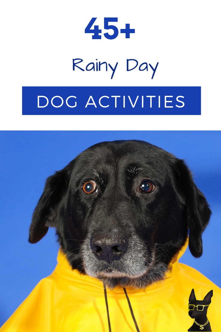 things to do with your dog, things to do with dog on rainy day