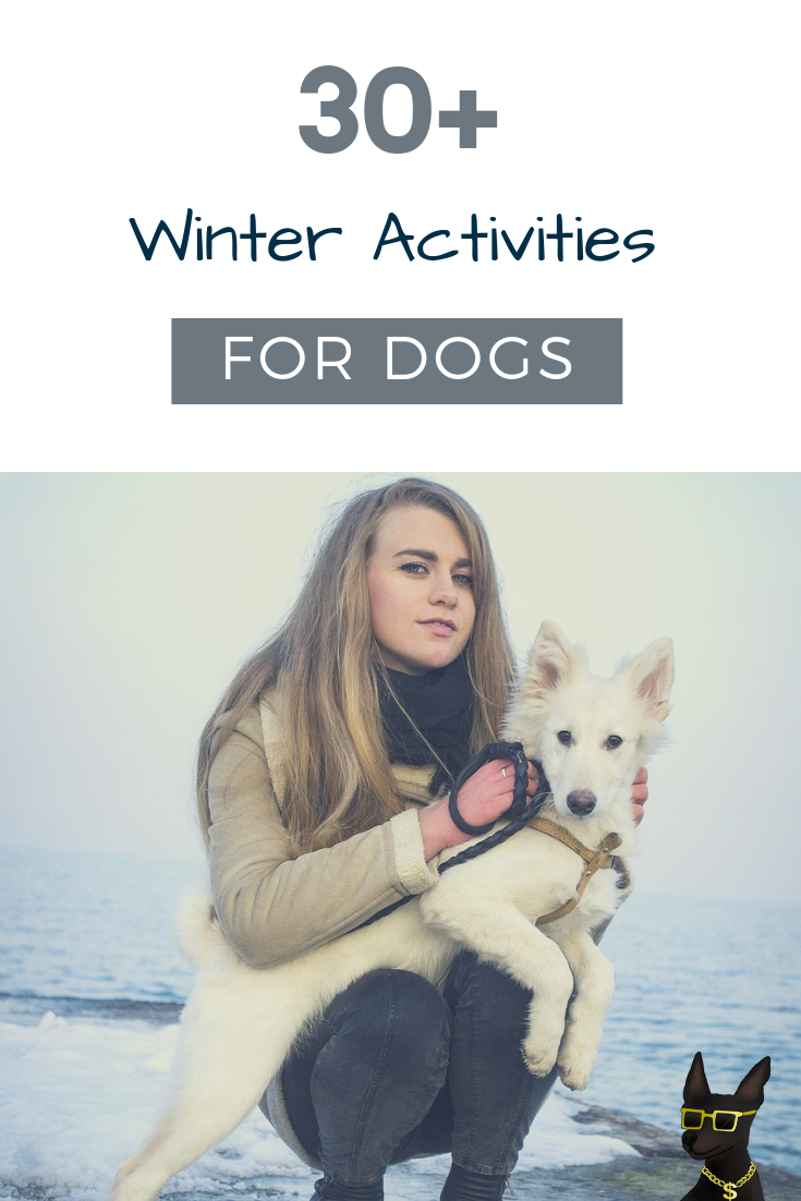things to do with dog in winter