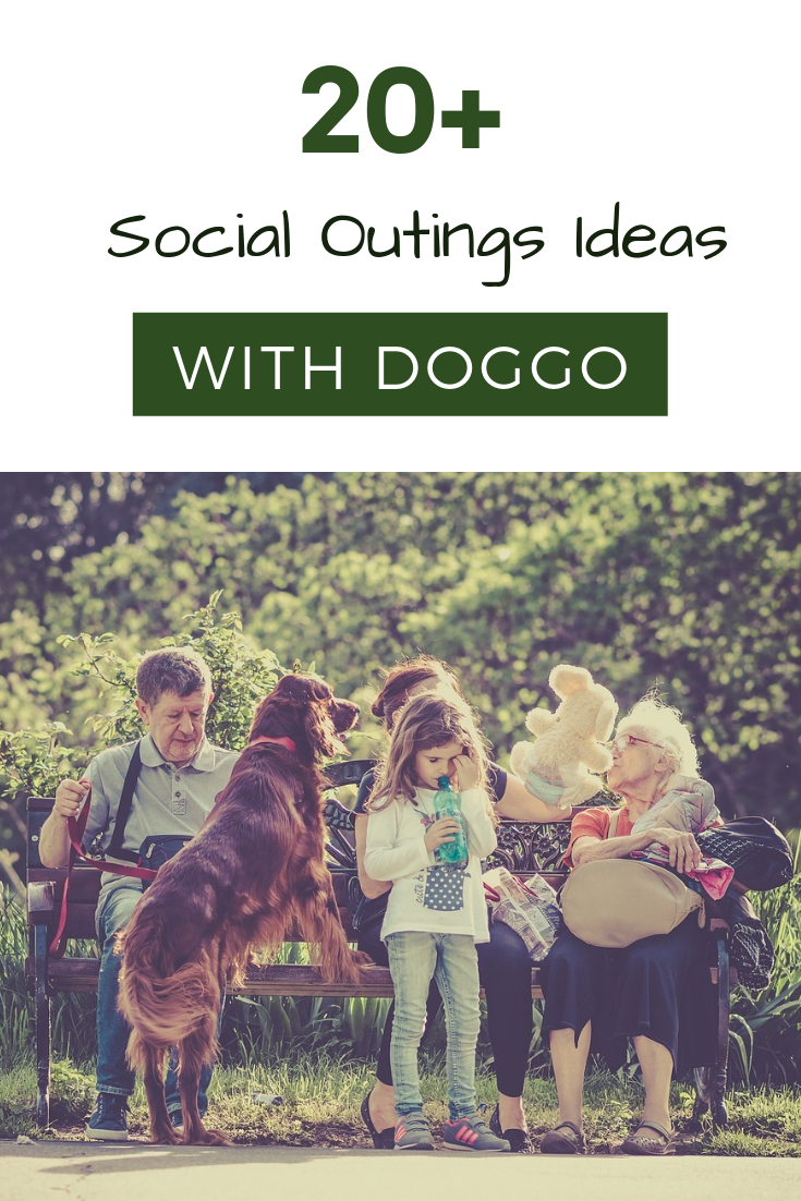 social things to do with your dog