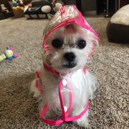 dog raincoat, raincoat for small dog